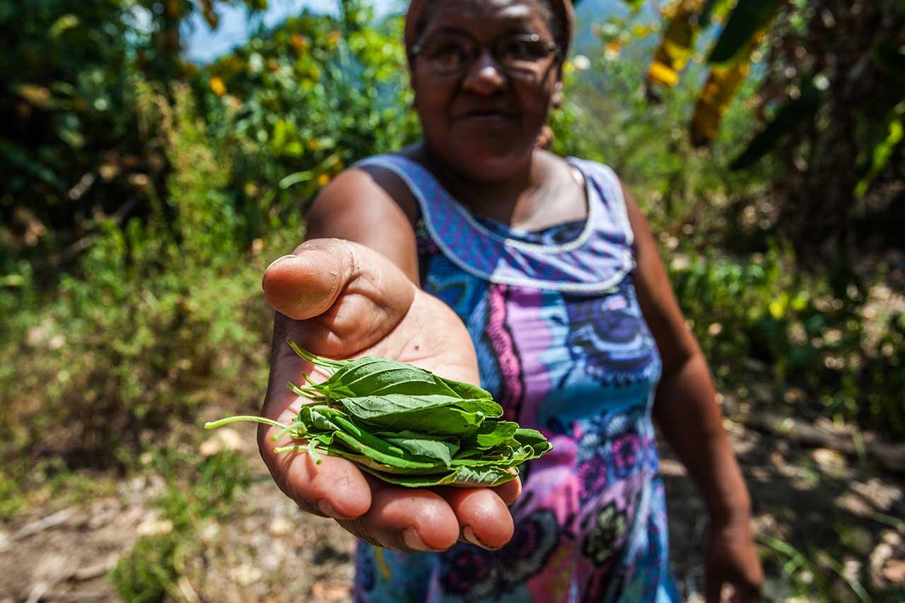 Quilombo de Santa Rita do Bracuí Angra dos Reis, Região da Costa Verde